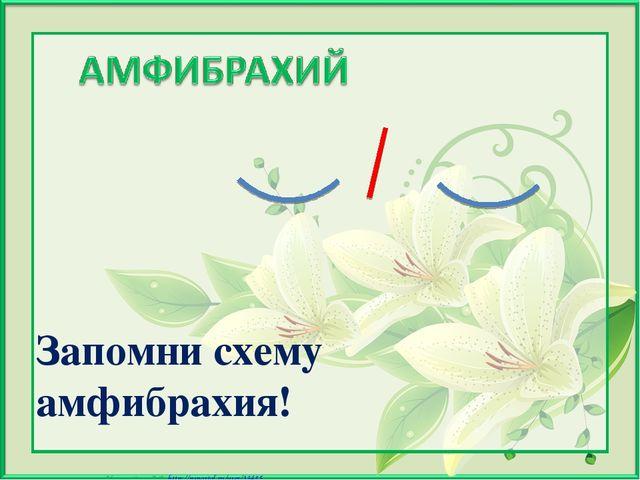 Запомни схему амфибрахия! Матюшкина А.В. http://nsportal.ru/user/33485