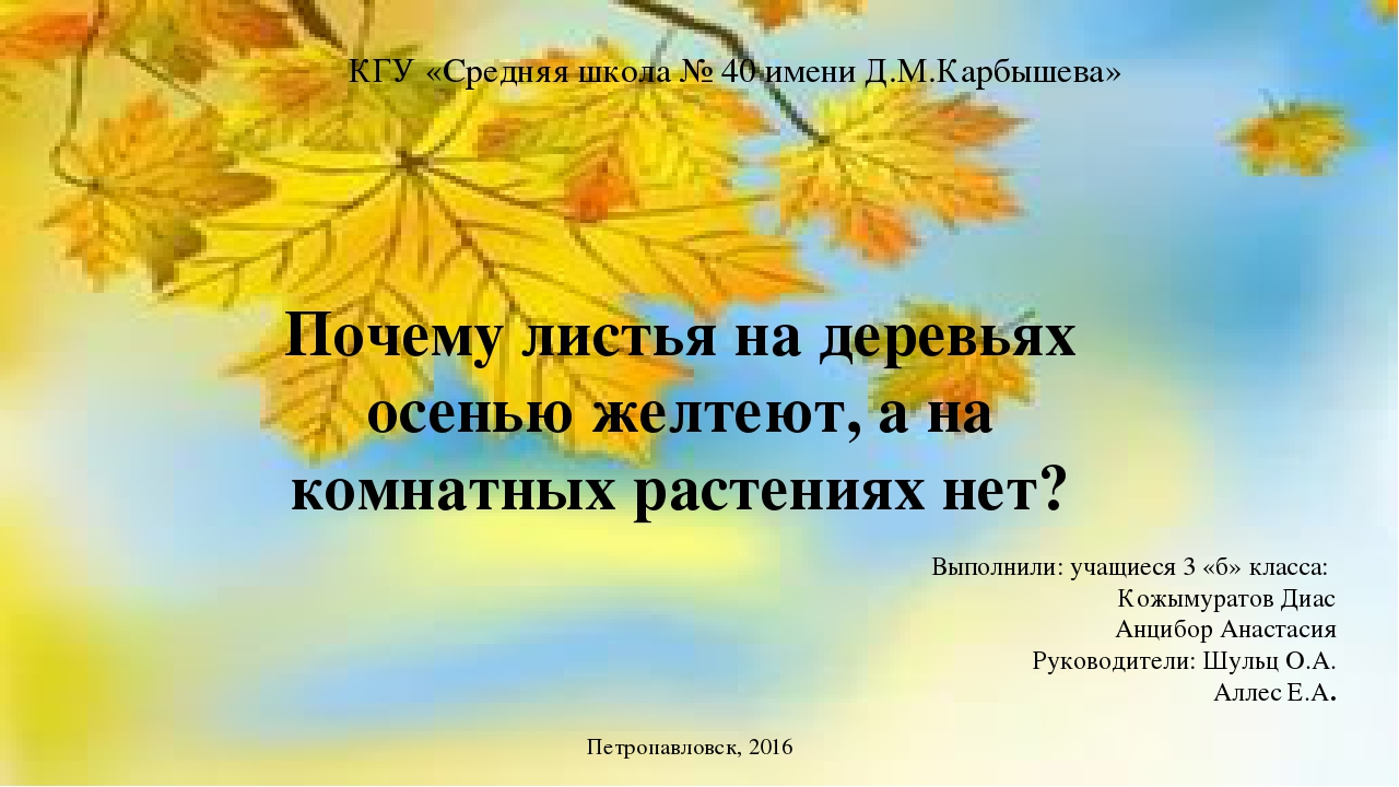 Почему листья на деревьях осенью желтеют а на комнатных растениях нет