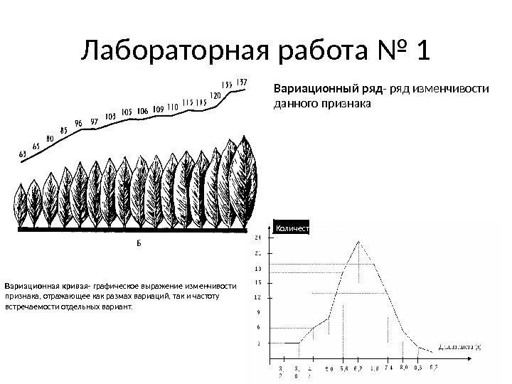 биология вариационный решебник гдз семян составить ряд