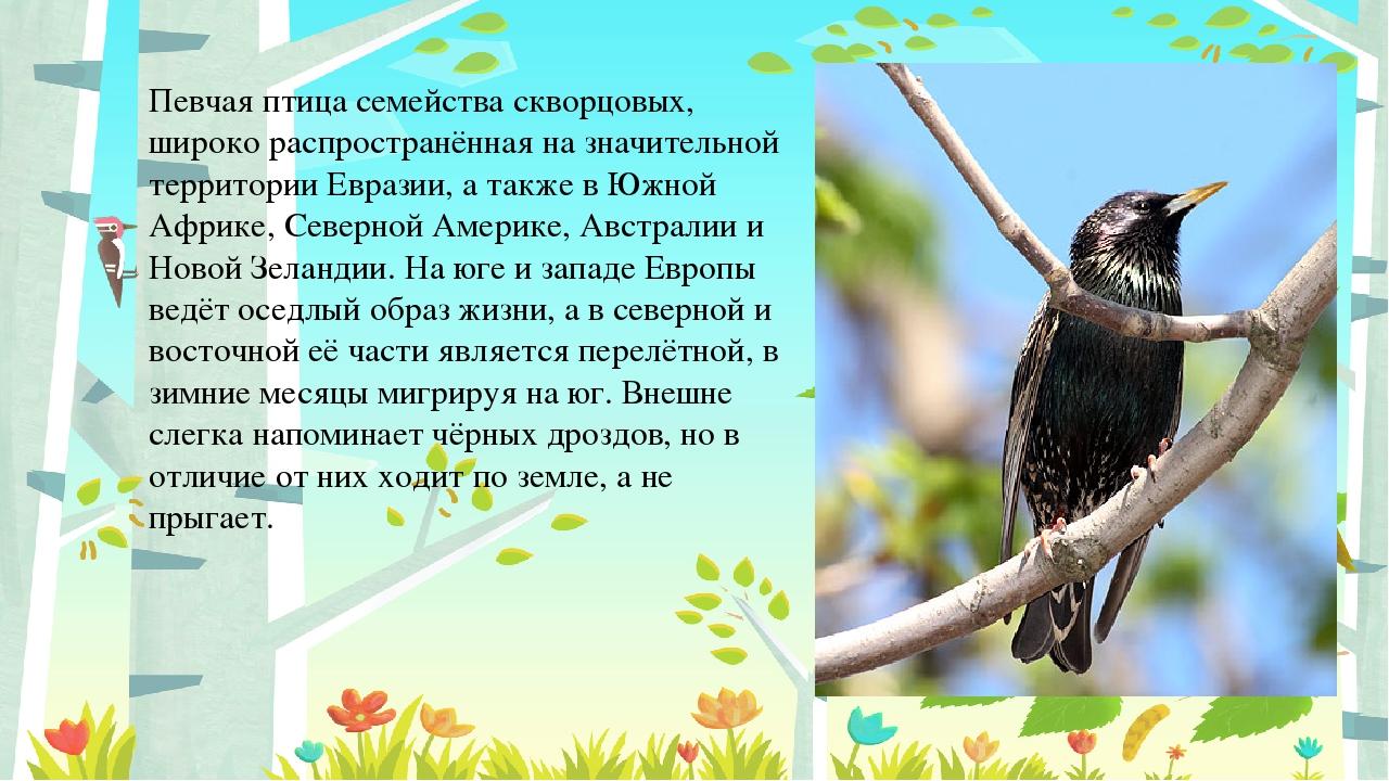 Певчая птица семейства скворцовых, широко распространённая на значительной те...