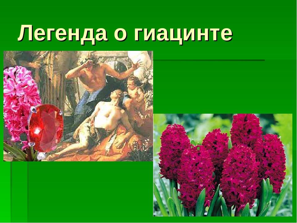 миф древней греции гиацинт картинки интересные поздравления днем
