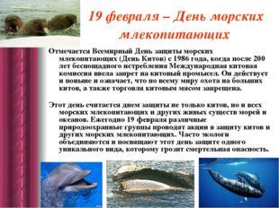 19 февраля – День морских млекопитающих Отмечается Всемирный День защиты морс