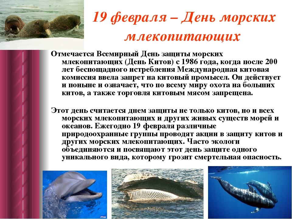 19 февраля – День морских млекопитающих Отмечается Всемирный День защиты морс...