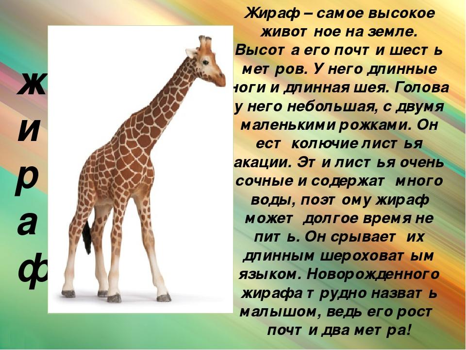 все картинки про жирафа признан одним
