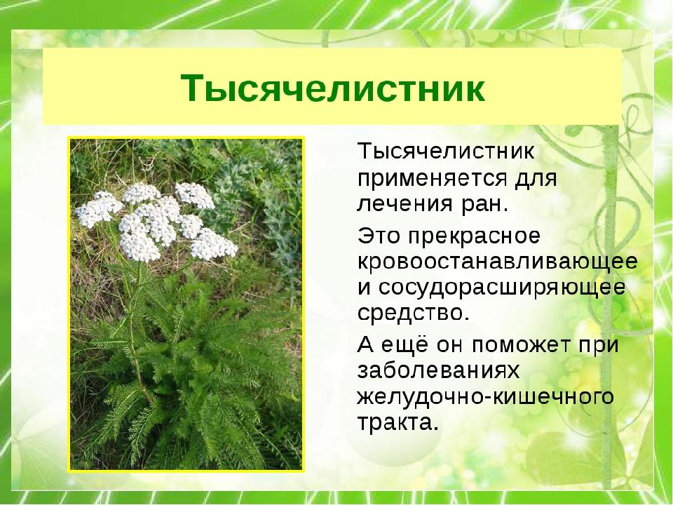 картинка с рассказами лекарственные растений живы