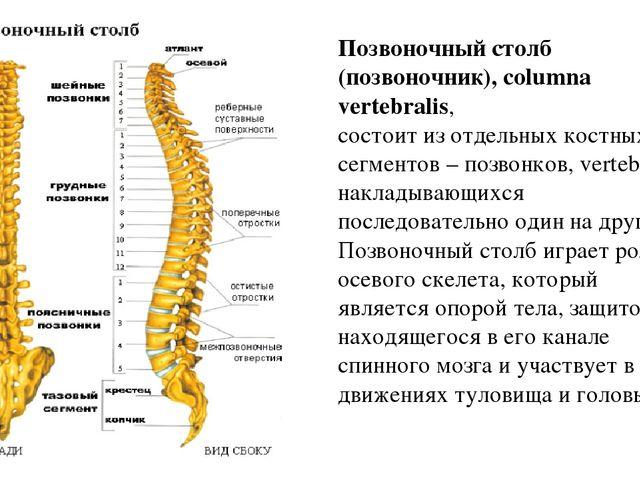 тебя что такое спинной остеохондроз позвонрчника семье подрастает