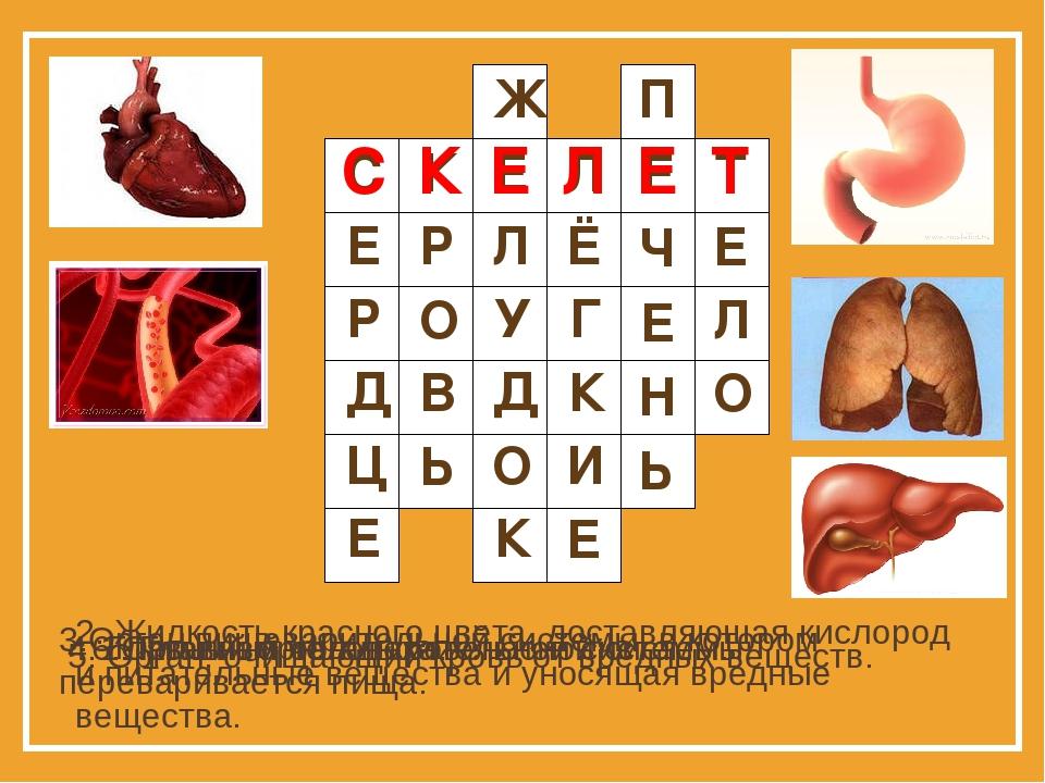 1. Главный орган кровеносной системы. 2. Жидкость красного цвета, доставляюща...