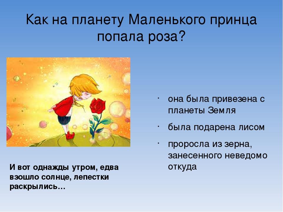 Как на планету Маленького принца попала роза? она была привезена с планеты Зе...