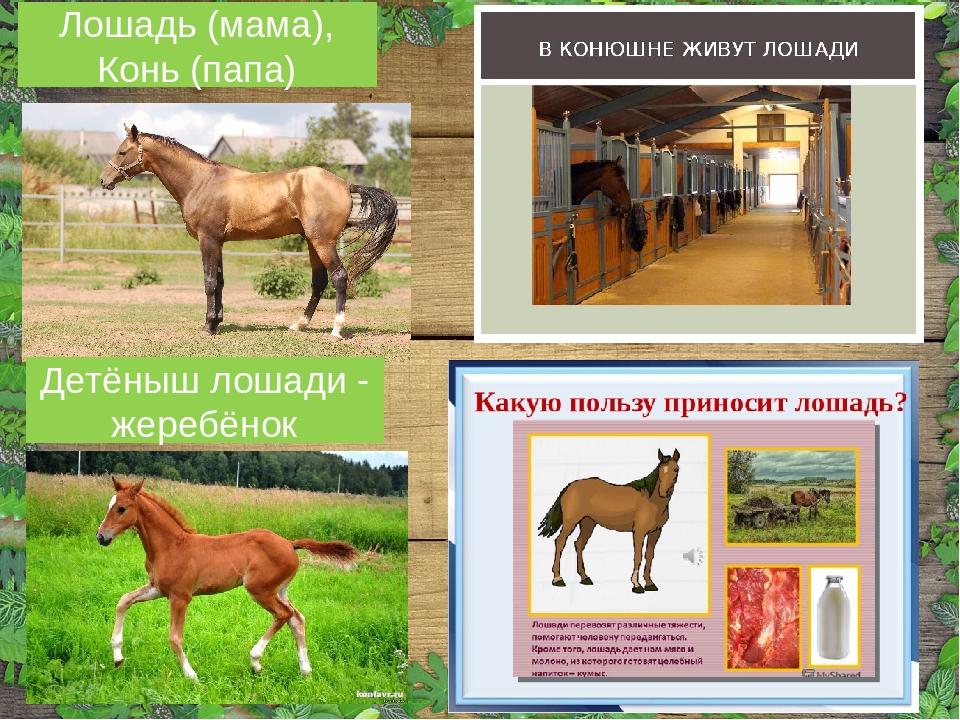 когда картинка польза лошади для человека свои сапоги легко