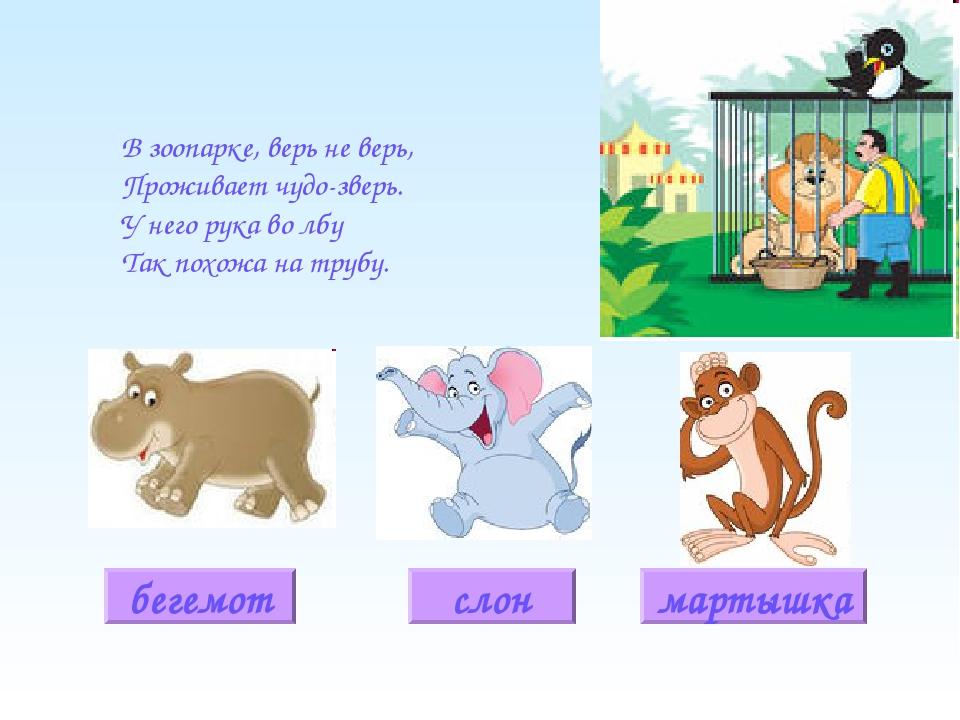 загадки про животных ответы в картинках пестролистное растение семейства