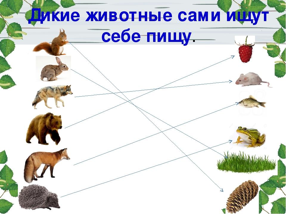 Картинки какое дикое животное что ест