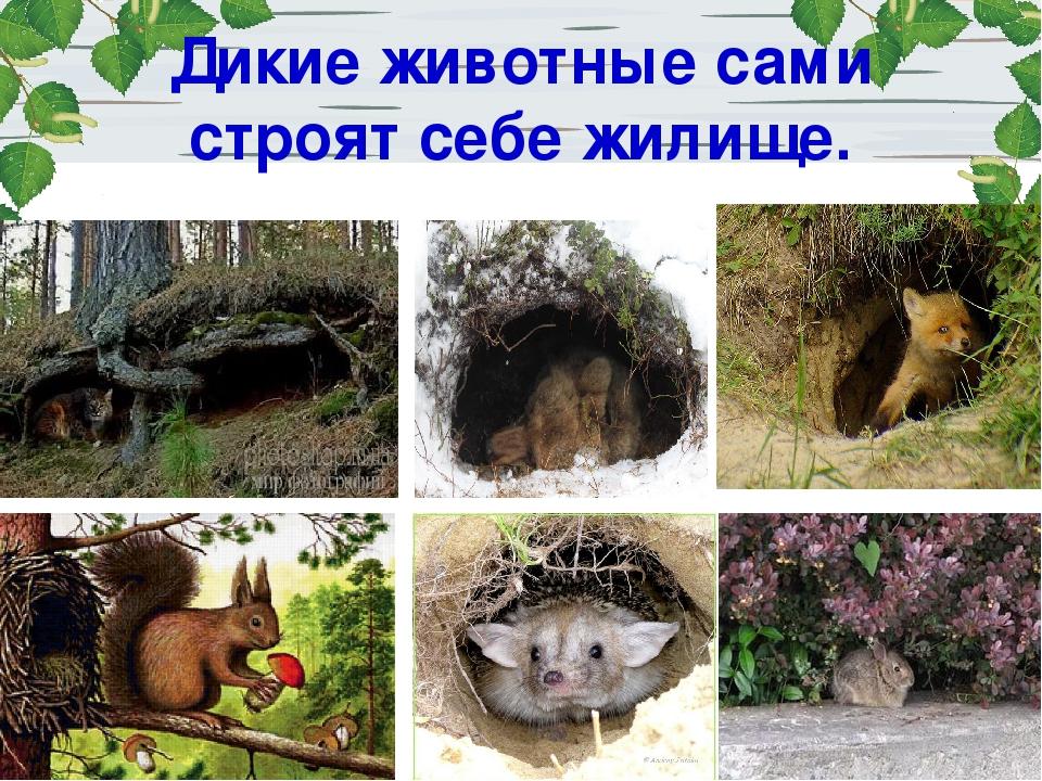 строительство жилища животных леса картинки конечно же