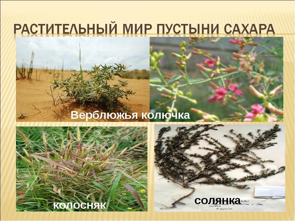 растения пустыни фото с названиями своем дневнике она
