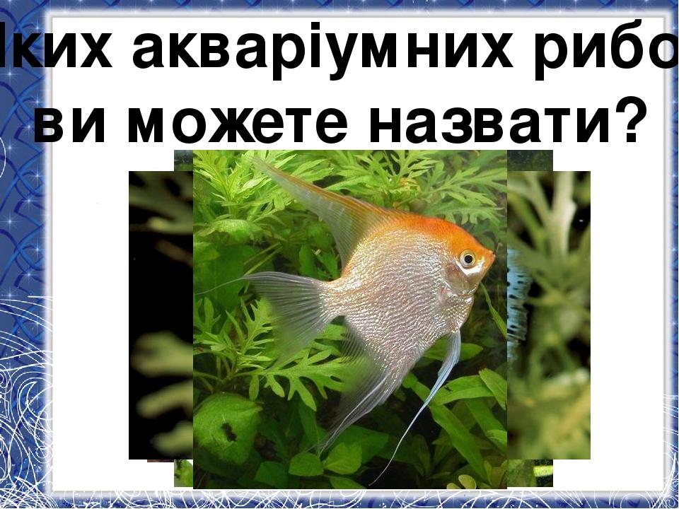 Яких акваріумних рибок ви можете назвати?
