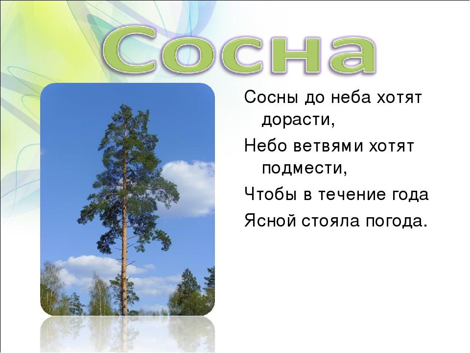 Сосны до неба хотят дорасти, Небо ветвями хотят подмести, Чтобы в течение год...