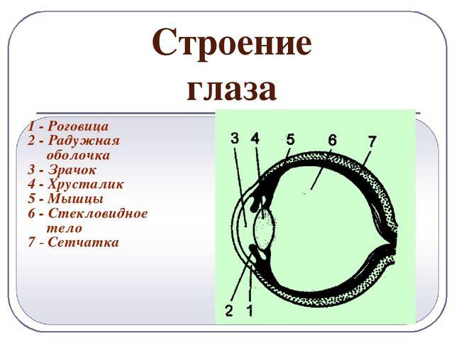 Беременность при астигматизме миопический