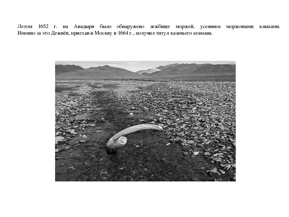 Летом 1652 г. на Анадыри было обнаружено лежбище моржей, усеянное моржовыми к...