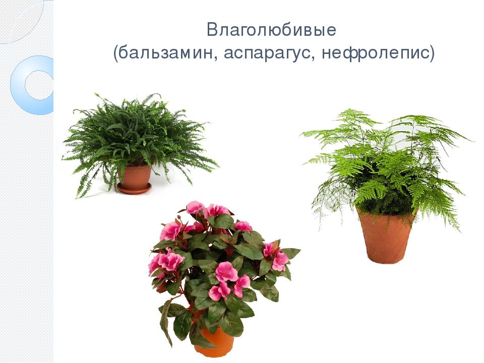 рецепты диетических влаголюбивые комнатные растения фото и названия лучших