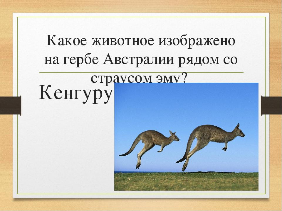 Какое животное изображено на гербе Австралии рядом со страусом эму? Кенгуру