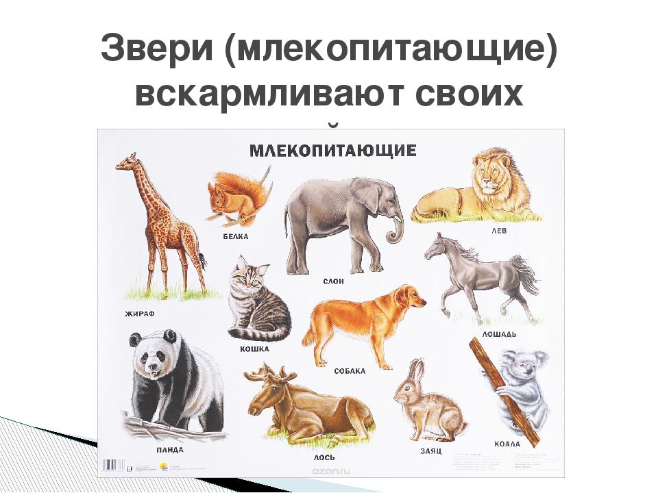 название групп животных с картинками древовидных