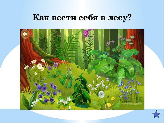 Как вести себя в лесу?