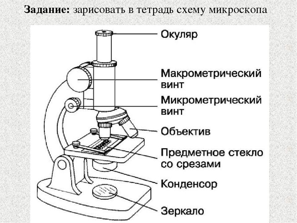 Как самому сделать микроскоп в картинках
