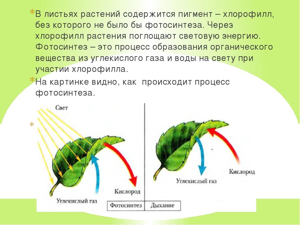 все цвет листа и фотосинтез уже