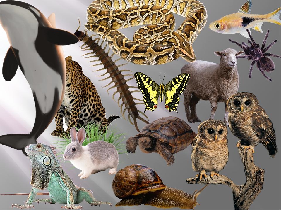 были маленькие картинки о биологии все фотографии