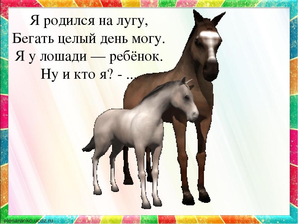 Лошади стихи короткие