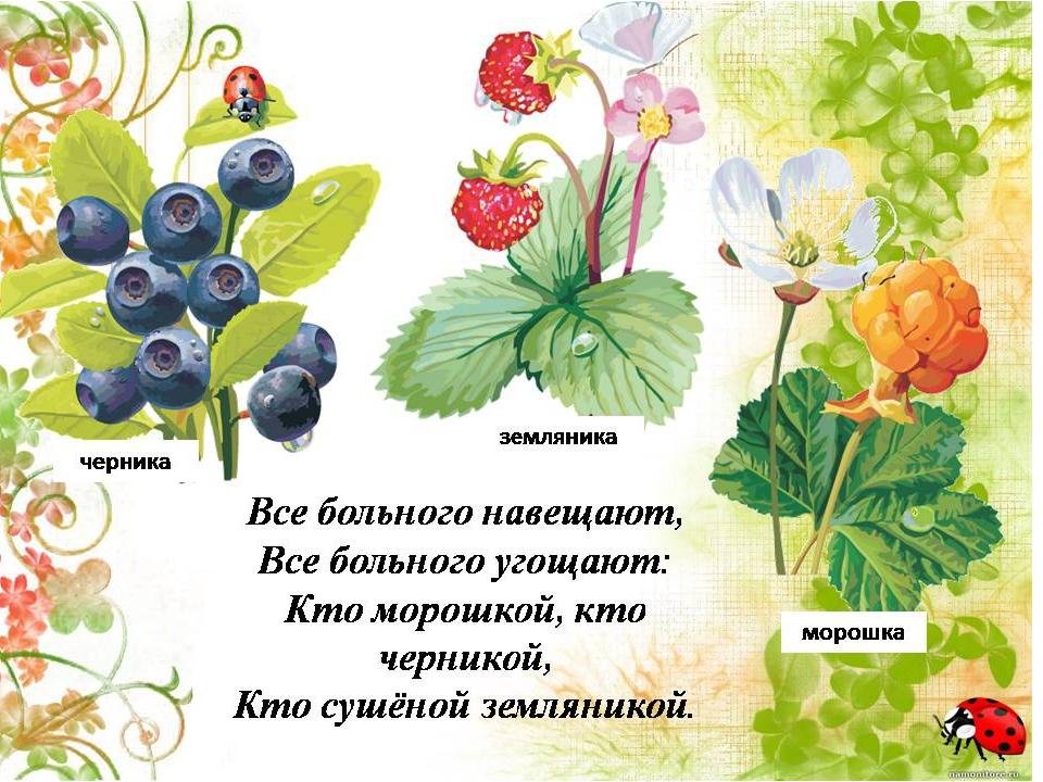 Картинки лекарственные растения для детей, какая красавица