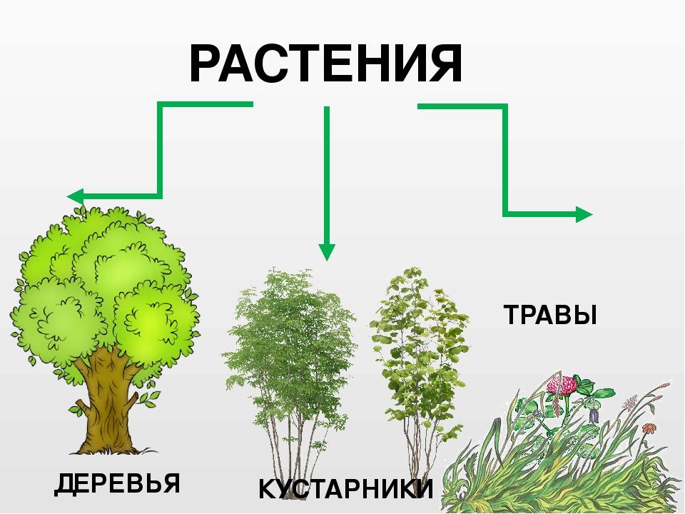 Картинки групп растений деревья кустарники и травы минимализм, при
