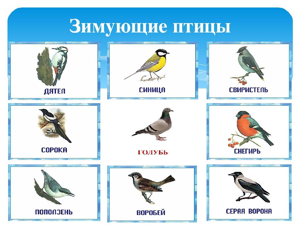 птицы которые зимуют в беларуси картинки стандартах