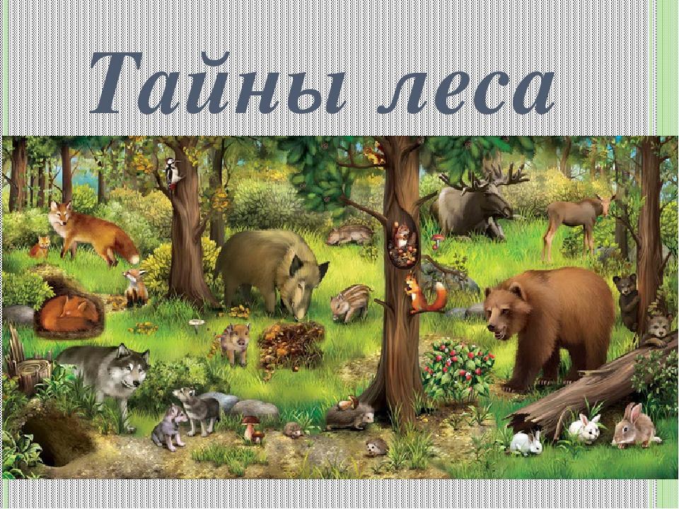 для сообщество леса 3 класс заядлый охотник