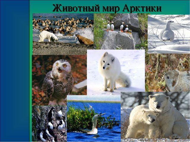 Сочинение о животном арктики 4 класс