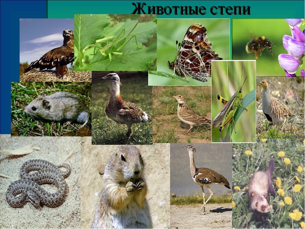Степь и животные картинки