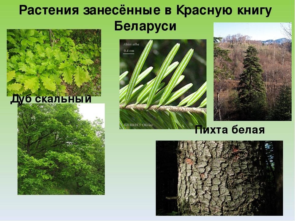 Доклад на тему лесная растительность 7552