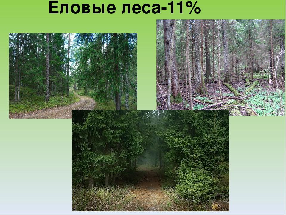 Доклад на тему лесная растительность 3110
