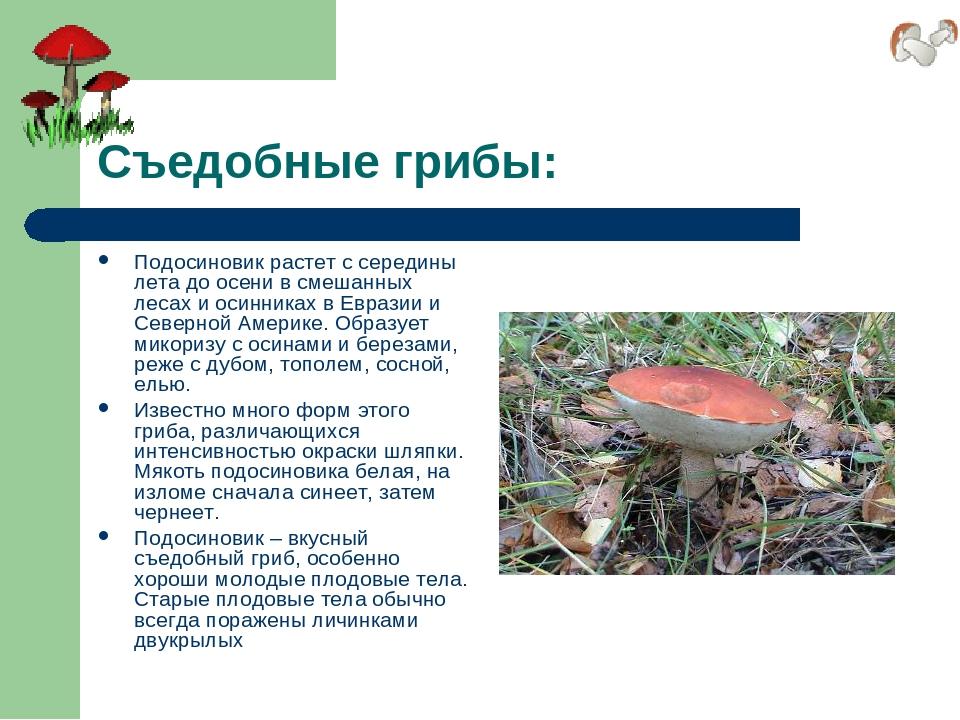 Съедобные грибы: Подосиновик растет с середины лета до осени в смешанных леса...