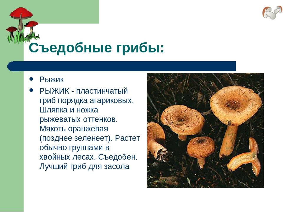 Съедобные грибы: Рыжик РЫЖИК - пластинчатый гриб порядка агариковых. Шляпка и...
