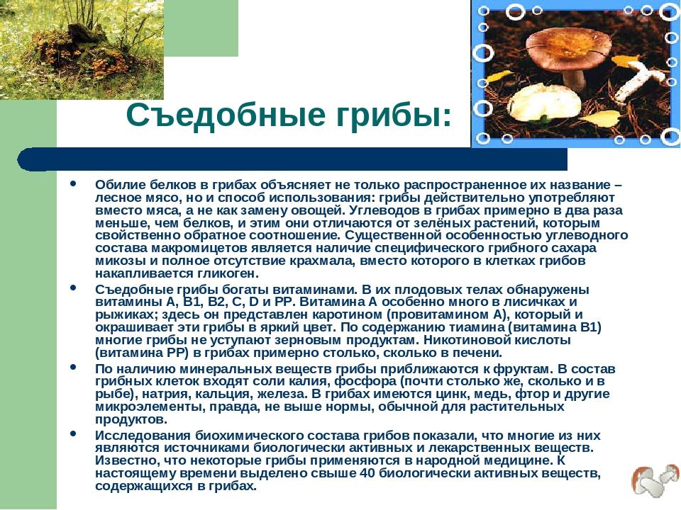 Съедобные грибы: Обилие белков в грибах объясняет не только распространенное...
