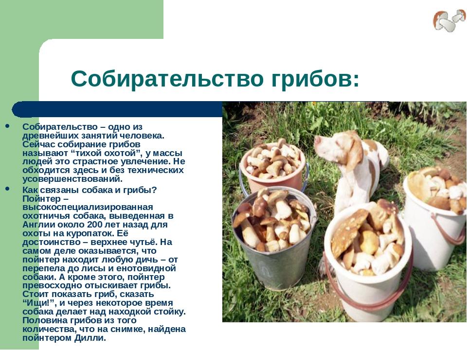 Собирательство грибов: Собирательство – одно из древнейших занятий человека....