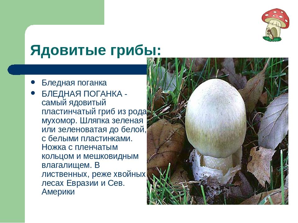 Ядовитые грибы: Бледная поганка БЛЕДНАЯ ПОГАНКА - самый ядовитый пластинчатый...