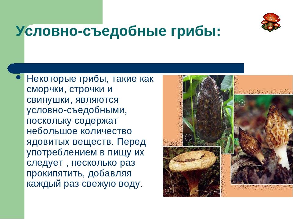 Условно-съедобные грибы: Некоторые грибы, такие как сморчки, строчки и свинуш...