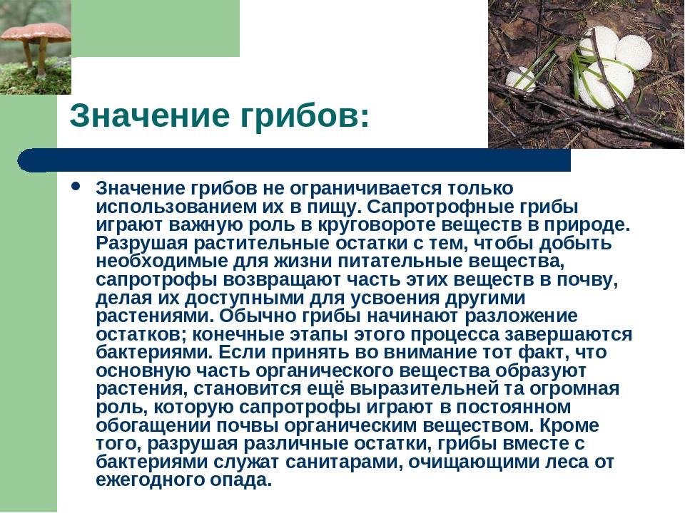 Значение грибов: Значение грибов не ограничивается только использованием их в...
