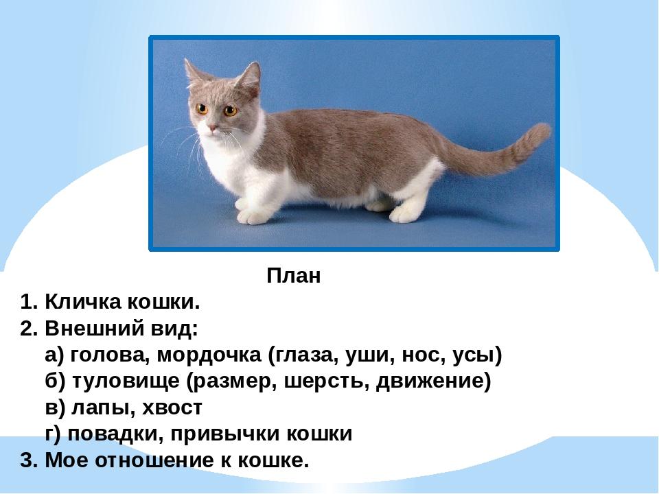 Прикольные имена для кошки