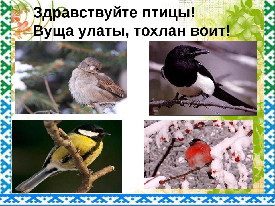 Здравствуйте птицы! Вуща улаты, тохлан воит!
