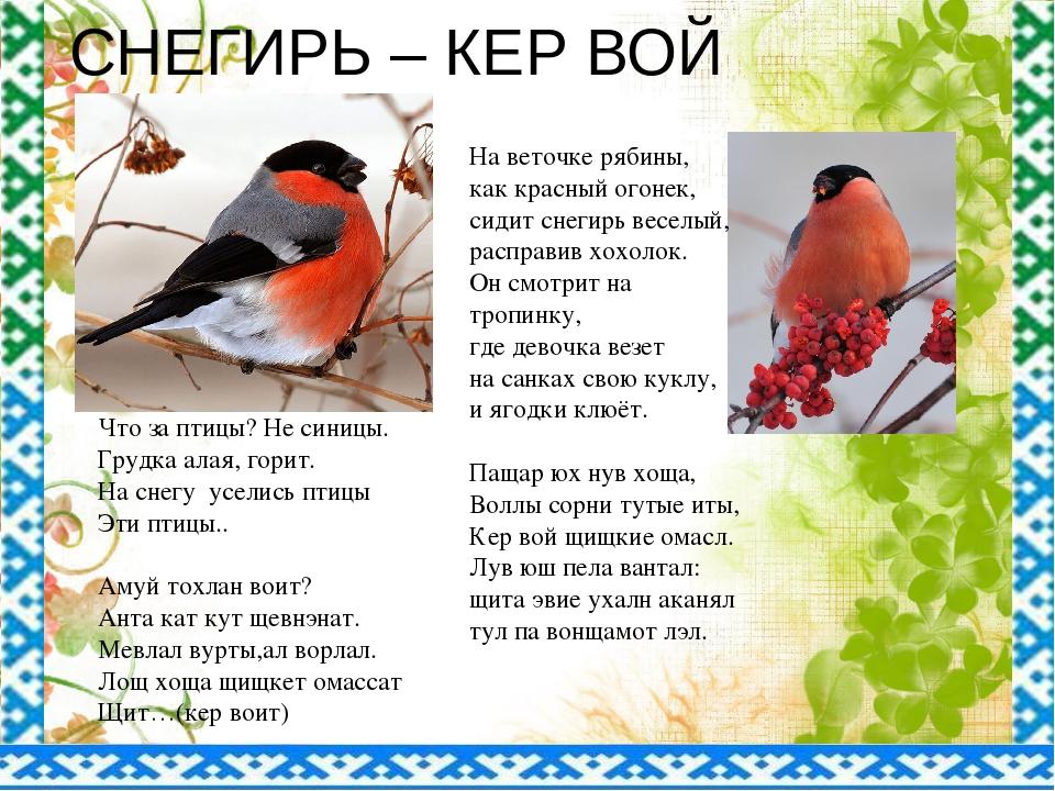 СНЕГИРЬ – КЕР ВОЙ На веточке рябины, как красный огонек, сидит снегирь веселы...