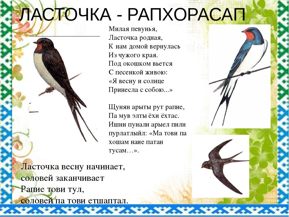 ЛАСТОЧКА - РАПХОРАСАП Милая певунья, Ласточка родная, К нам домой вернулась И...