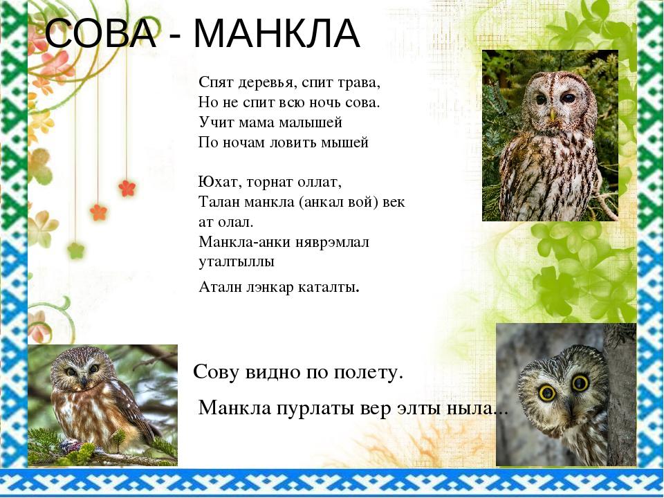 СОВА - МАНКЛА Спят деревья, спит трава, Но не спит всю ночь сова. Учит мама м...