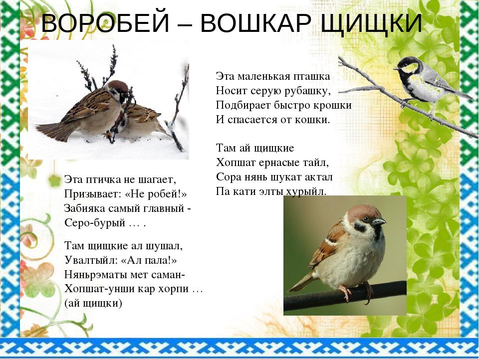 ВОРОБЕЙ – ВОШКАР ЩИЩКИ Эта маленькая пташка Носит серую рубашку, Подбирает бы...